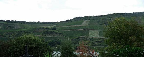 Blick in den Bopparder Hamm, vom Weingut Didinger aus